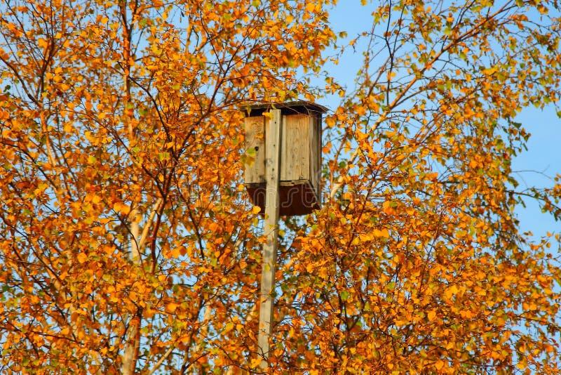 Fågelhus på ett träd med gult blad royaltyfria bilder