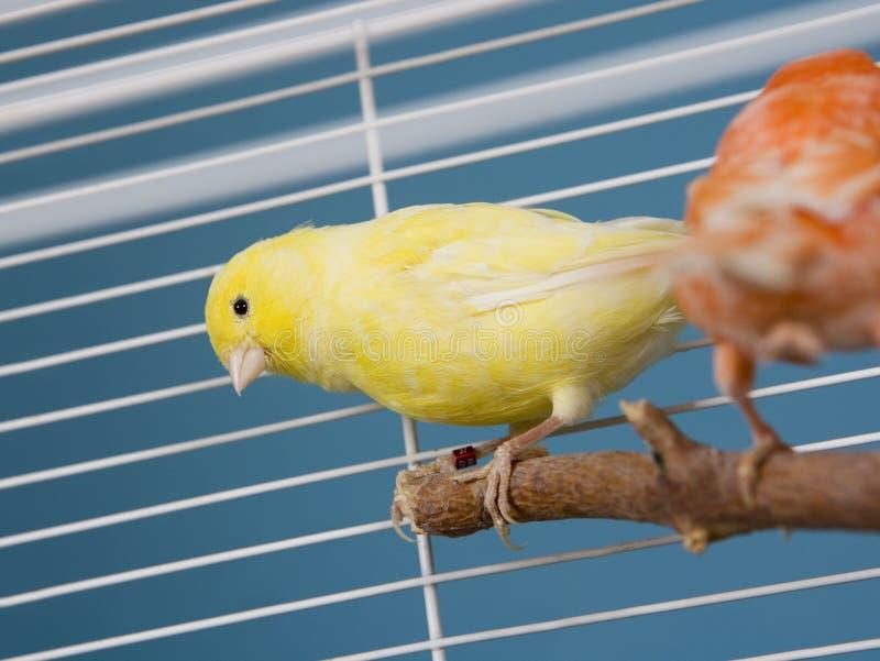 fågelhusdjur arkivbild