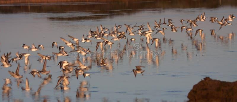 fågelinlandhav arkivbilder