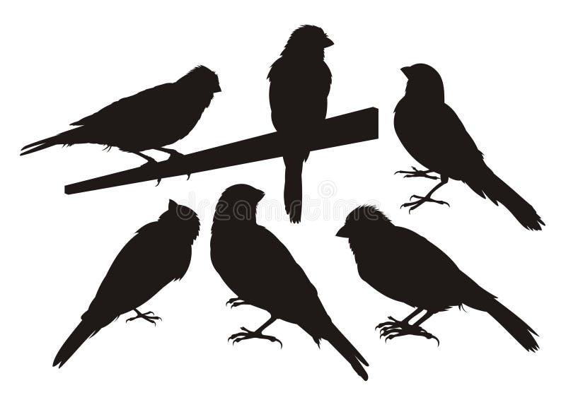 fågelkanariefågelsilhouettes royaltyfri illustrationer
