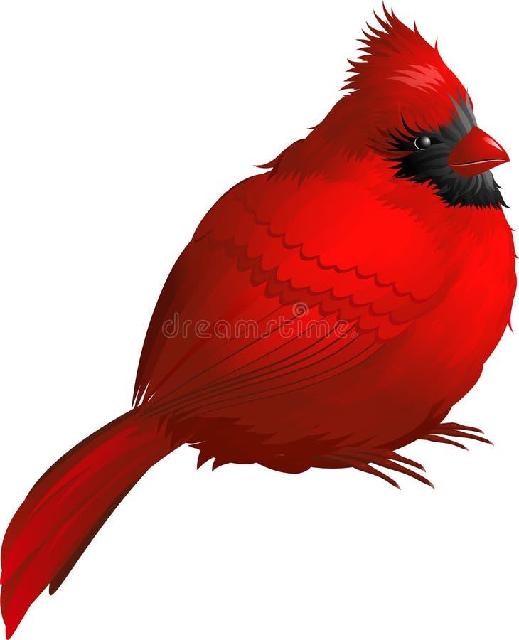 fågelkardinal vektor illustrationer