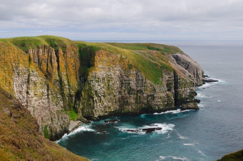 Fågelklippor i Newfoundland arkivfoto