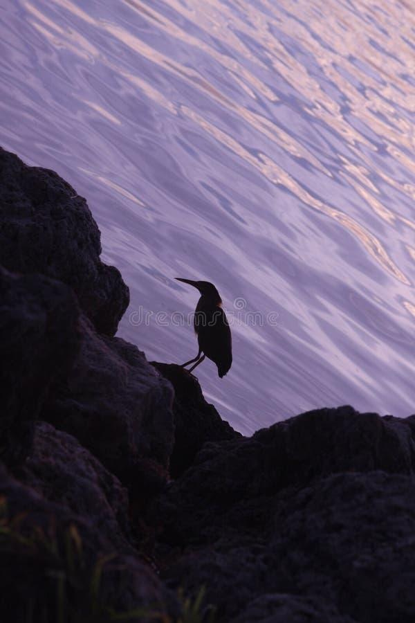 Fågelkontur och solnedgång royaltyfri fotografi