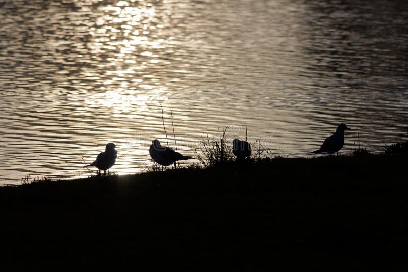 Fågelkonturer royaltyfri foto