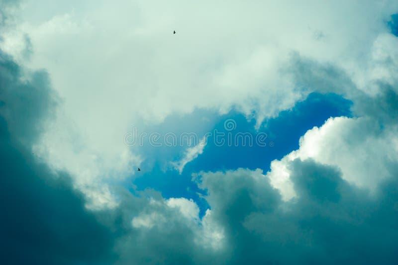Fågelkonturer mot en molnig himmel royaltyfria bilder