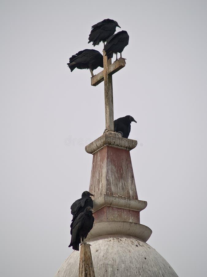 fågelkors royaltyfria foton