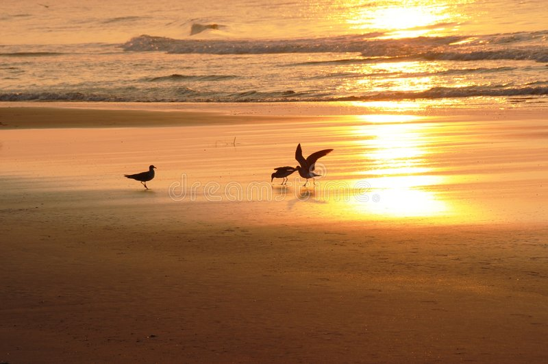 fågelmorgon arkivfoton
