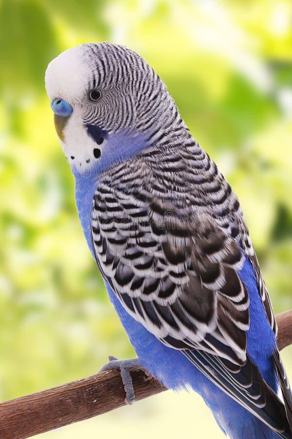 Fågeln är på en grön bakgrund royaltyfria bilder