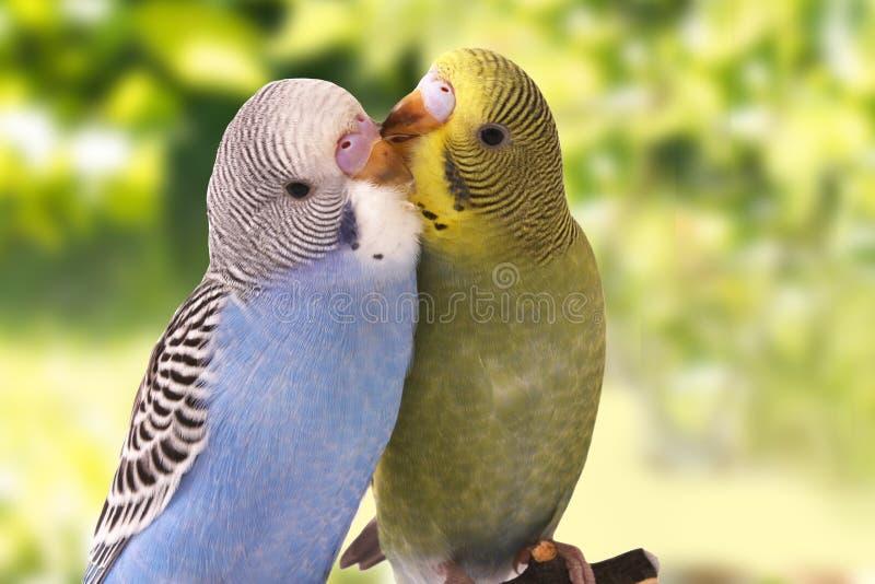 Fågeln är på en grön bakgrund royaltyfri foto
