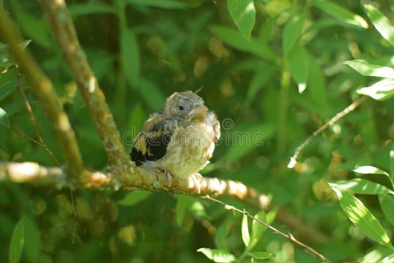 Fågeln behandla som ett barn arkivfoton