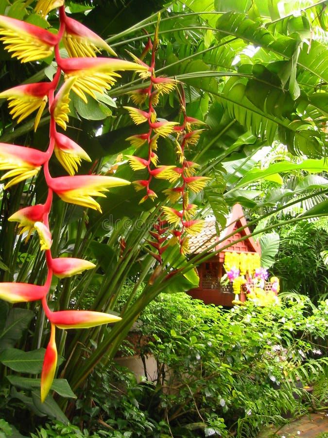 fågeln blommar paradiset tropiska thailand