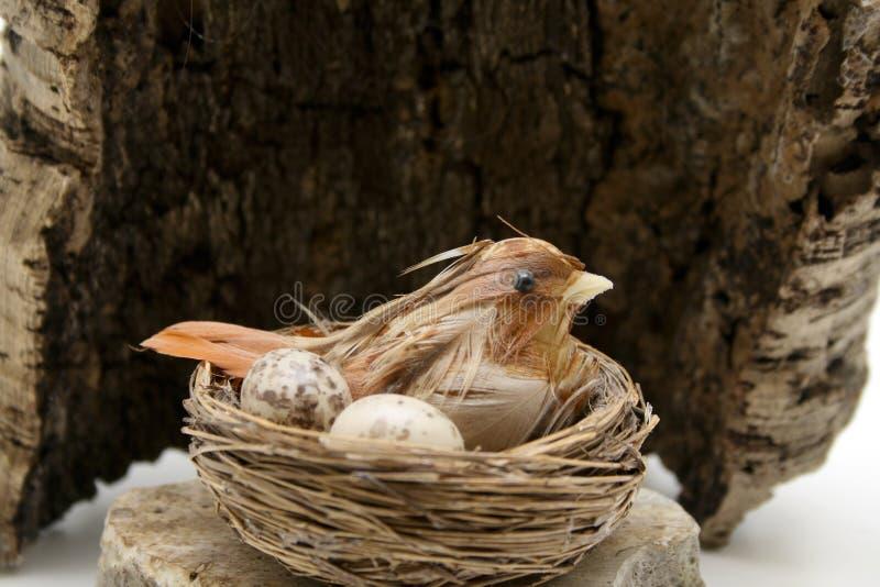 Fågeln bygga bo för treeskället royaltyfria bilder