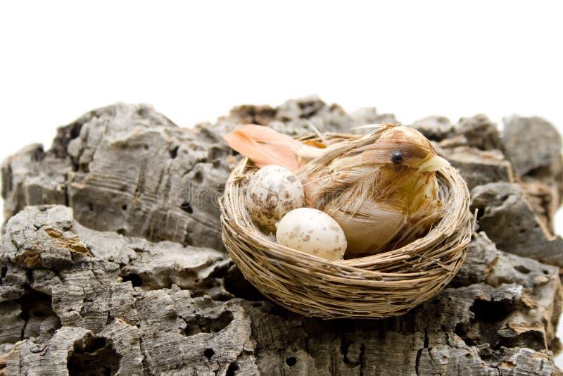 Fågeln bygga bo på treeskäll arkivfoton