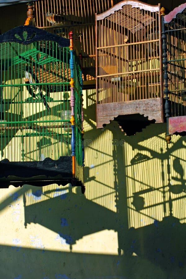 fågeln cages indonesia java arkivbild