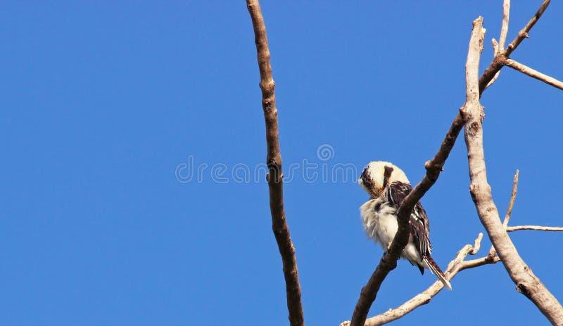 Fågeln förgrena sig på royaltyfria foton