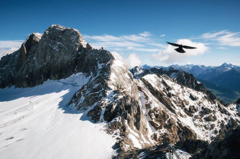 Fågeln flyger över den Dachstein glaciären, Österrike royaltyfria bilder
