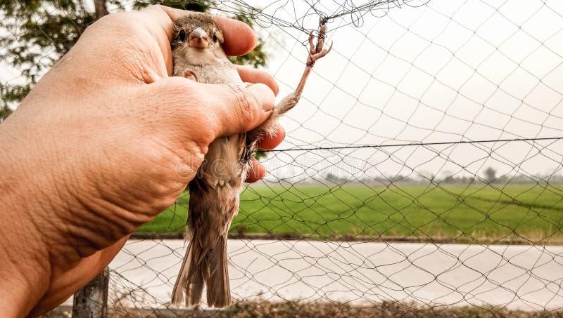 Fågeln hjälps fotografering för bildbyråer