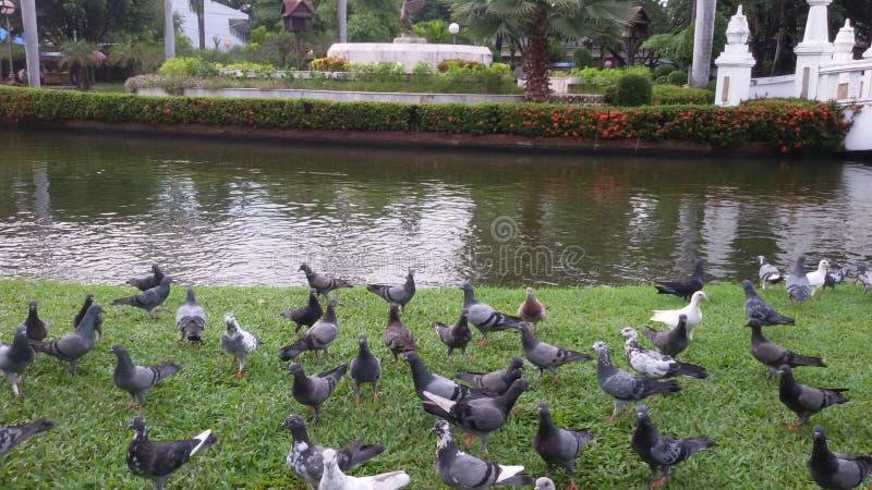 Fågeln i buak-haadträdgård arkivfoto