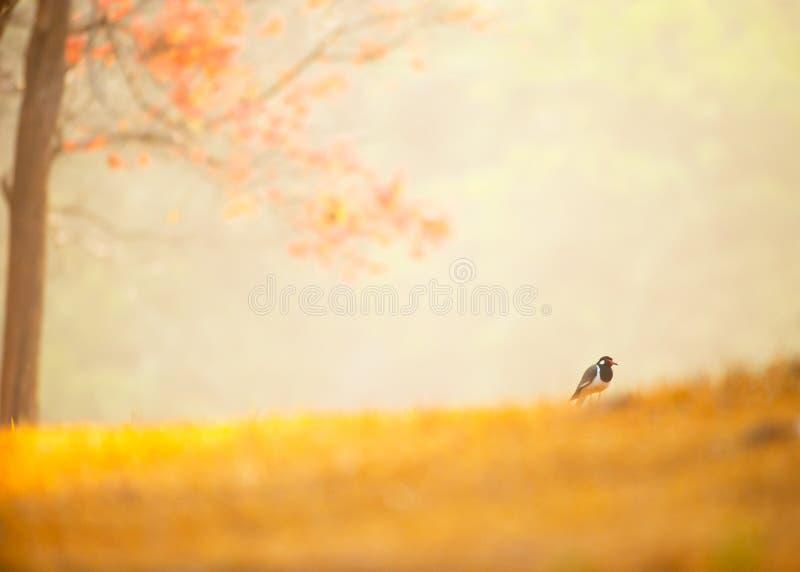 Fågeln i ett fridsamt och underbart hem fotografering för bildbyråer