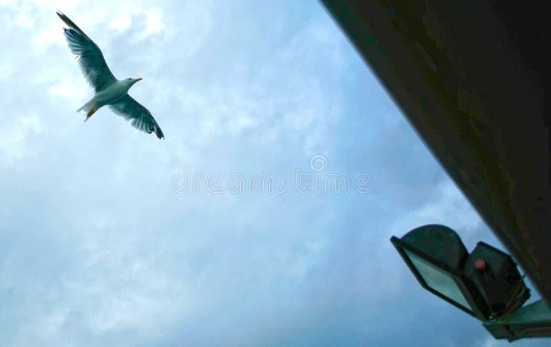 Fågeln Marmara bevattnar Istanbul arkivbilder