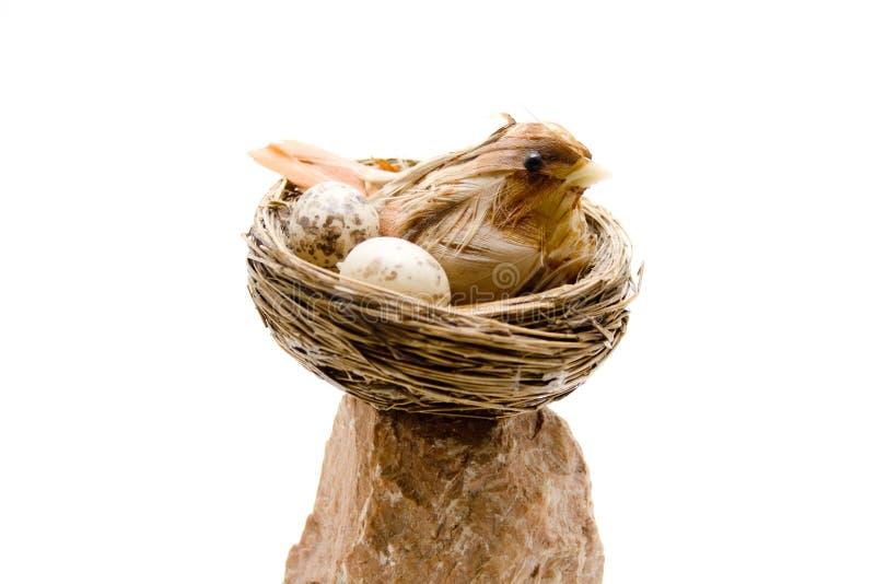 Fågeln med ägget i fågeln bygga bo arkivfoton