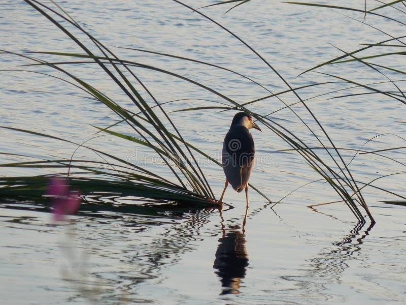 Fågeln och bevattnar royaltyfria foton