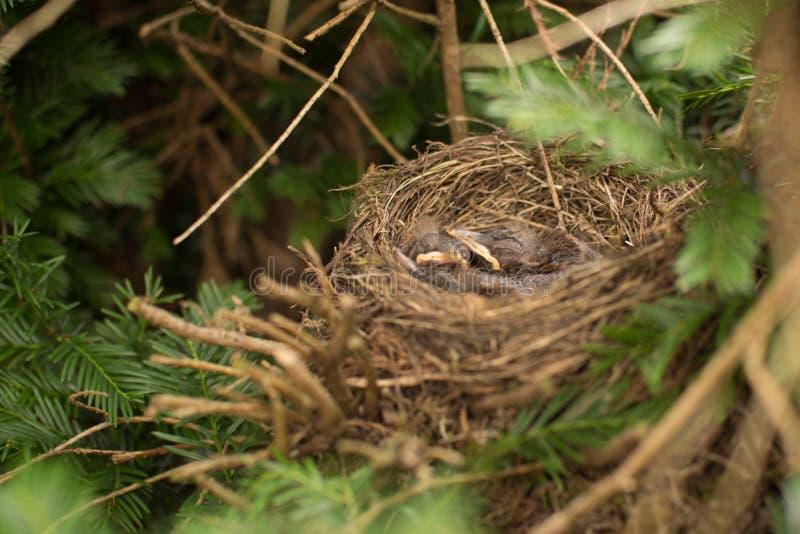 Fågeln och fågelungarna royaltyfri bild