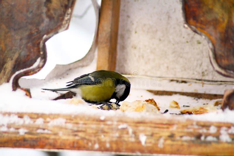 Fågeln på förlagemataren arkivbild