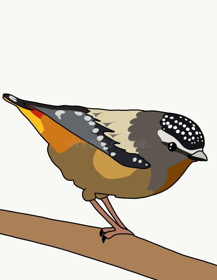 Fågelpardalote vektor illustrationer