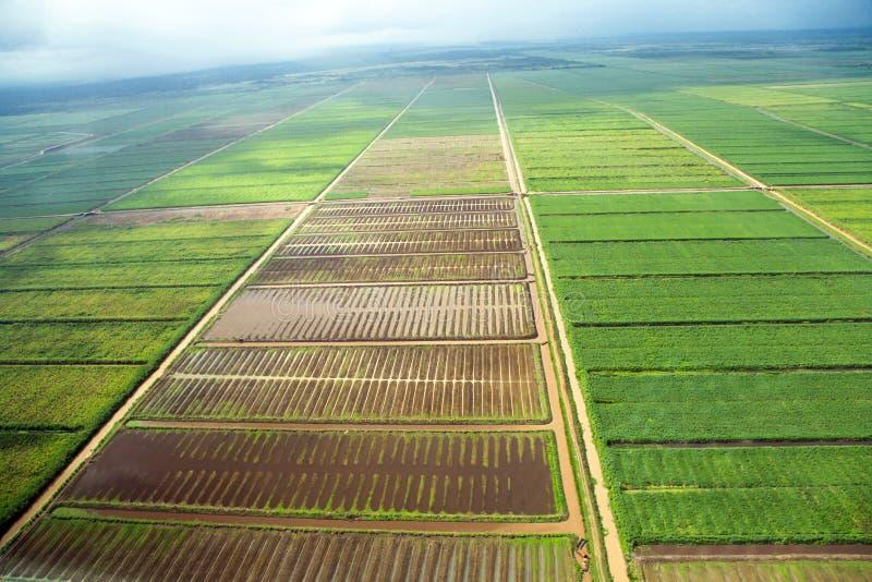 Fågelperspektiv av fälten med vattenkanaler som tas från nivån, förort av Georgetown fotografering för bildbyråer