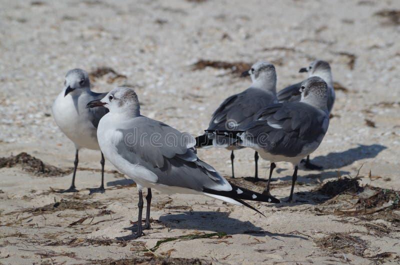 Fågelperspektiv: seagulls arkivbild