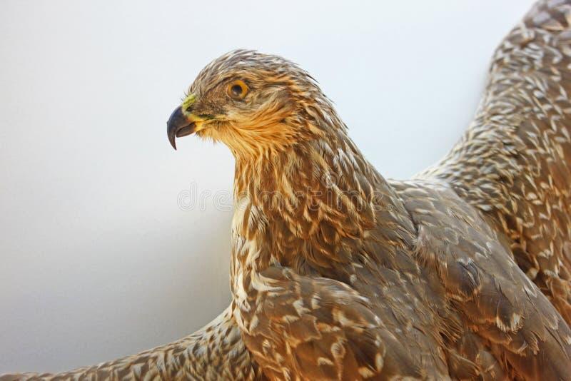 Fågelprov royaltyfri fotografi
