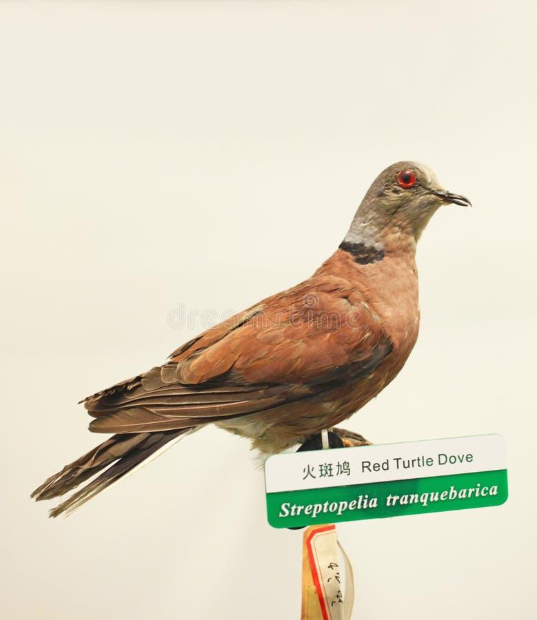 Fågelprov royaltyfria bilder