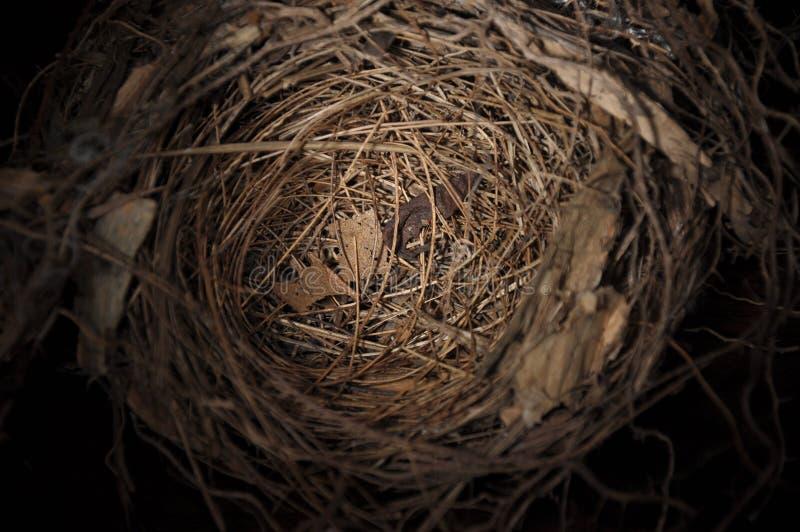 fågelrede arkivfoto