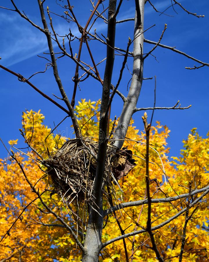 Fågelrede i träd med höstfärger royaltyfri fotografi