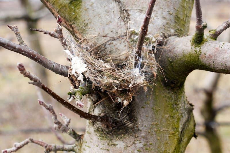Fågelrede på ett äppleträd royaltyfria bilder