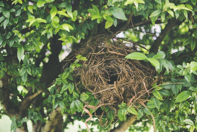 Fågelrede på ett träd arkivfoton