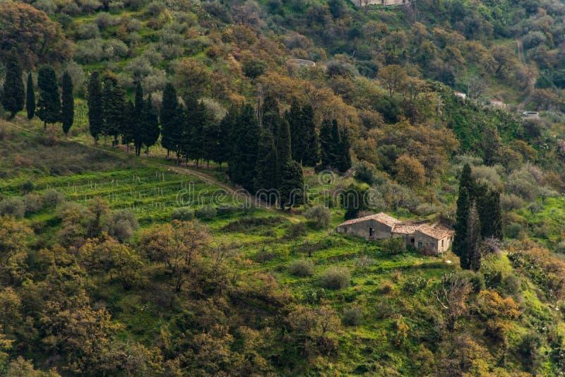 Fågels sikt för öga av en liten vingård på en kulle i Sicilien, Italien, royaltyfri bild