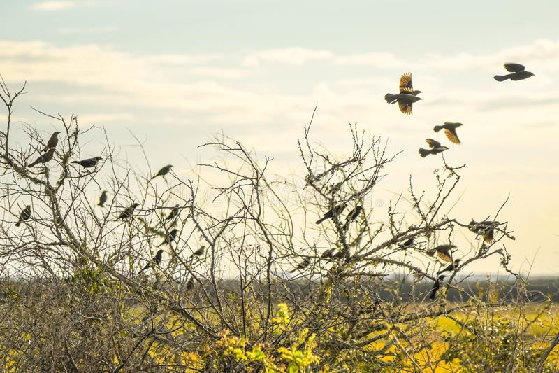 Fågels slut i sen eftermiddag royaltyfri bild