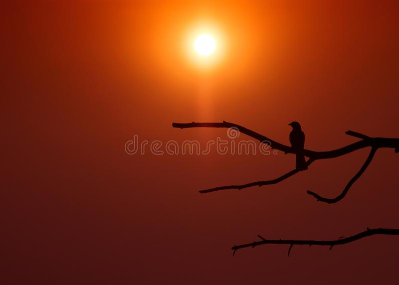 Fågelsammanträde på en trädfilial mot en sommarsolnedgångbakgrund royaltyfria bilder
