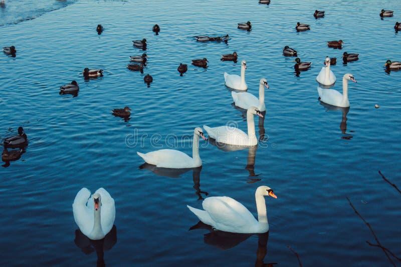 Fågelsikten i Tyskland fotografering för bildbyråer