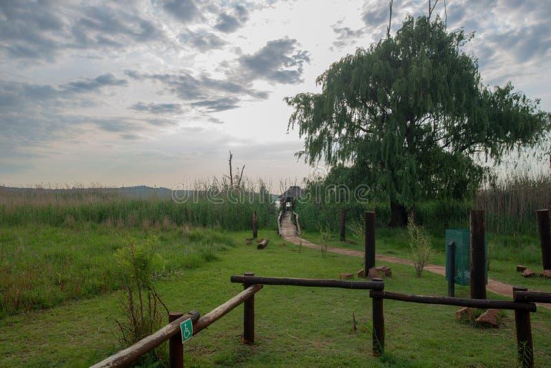 Fågelskinn, Rietvlei naturreserv, Sydafrika royaltyfri foto