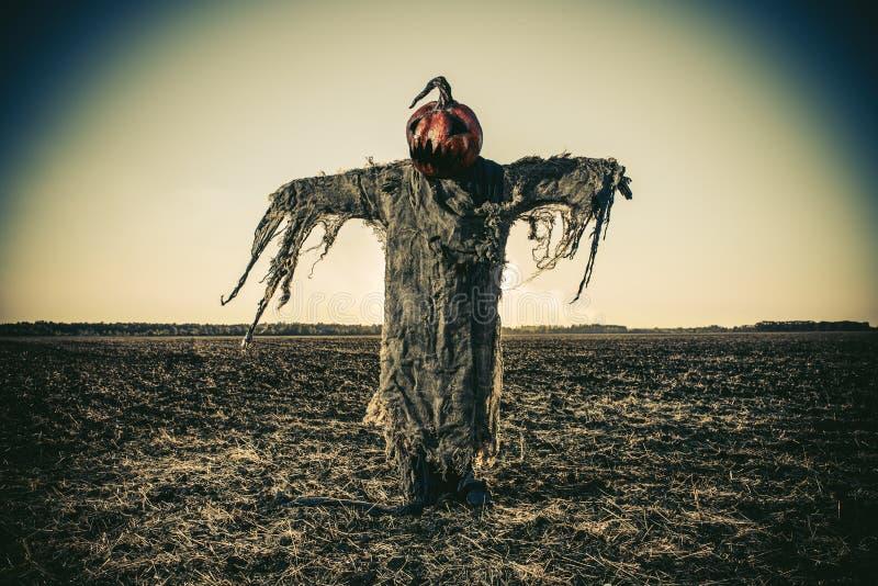 Fågelskrämma på halloween royaltyfri foto