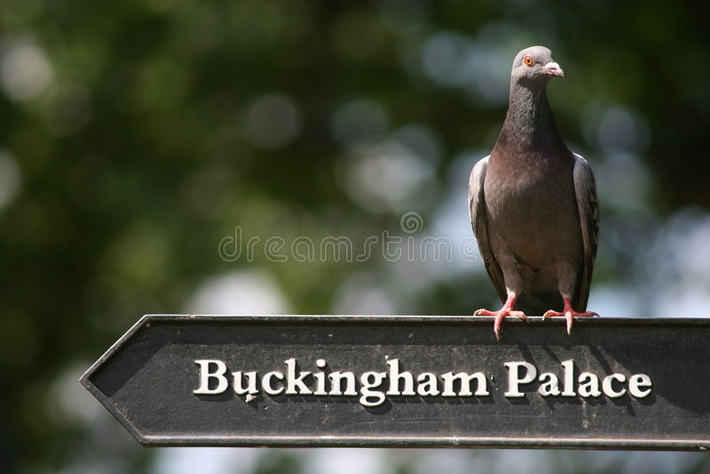 fågelslott royaltyfri foto