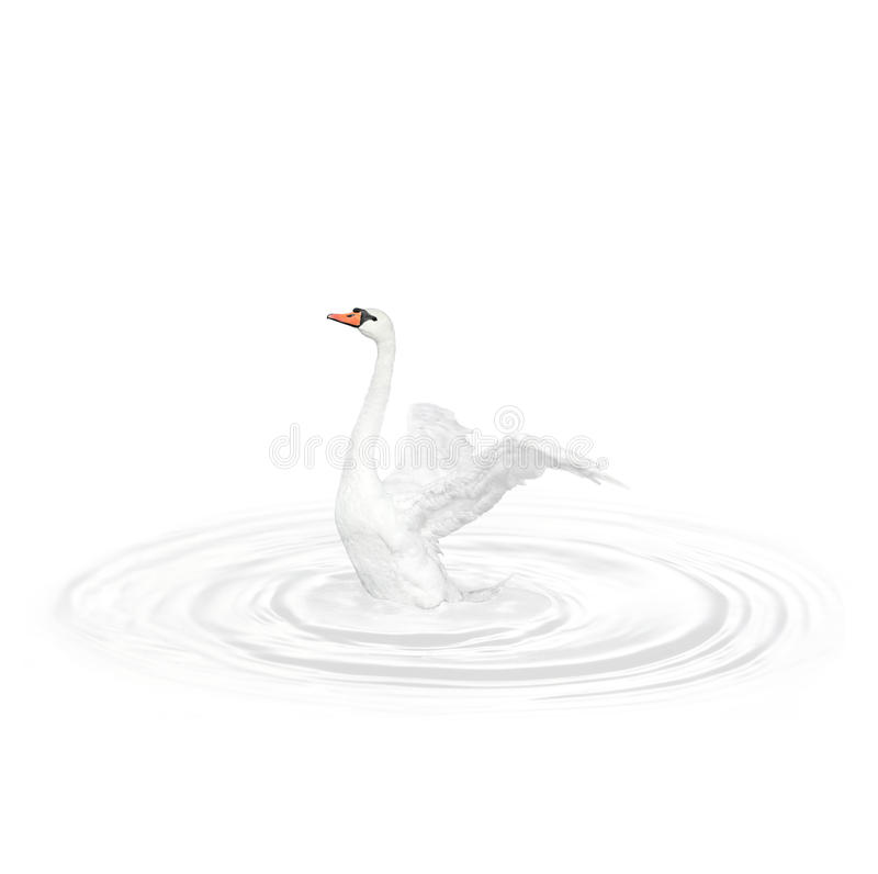 Fågelsvan arkivfoto