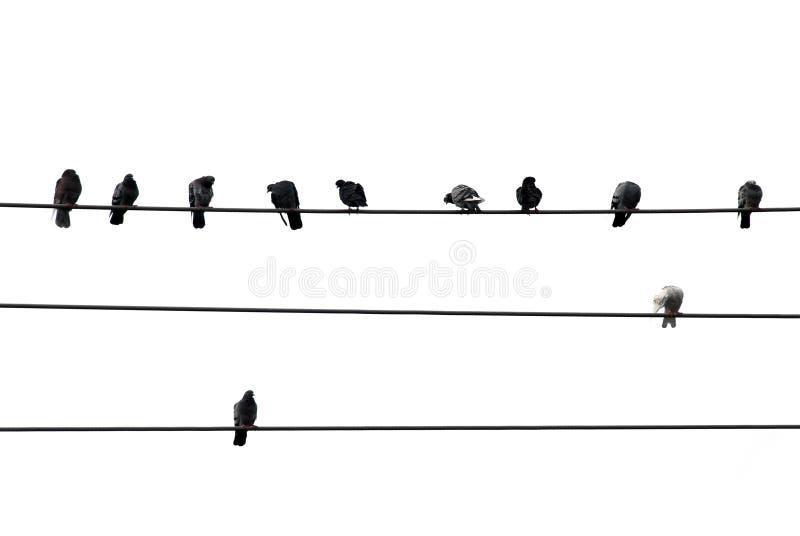 fågeltråd royaltyfri bild