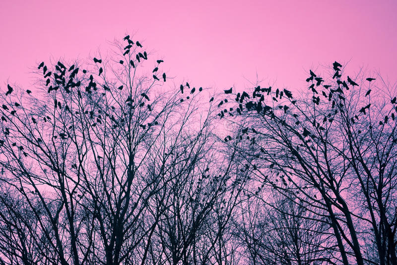 fågeltrees royaltyfria foton