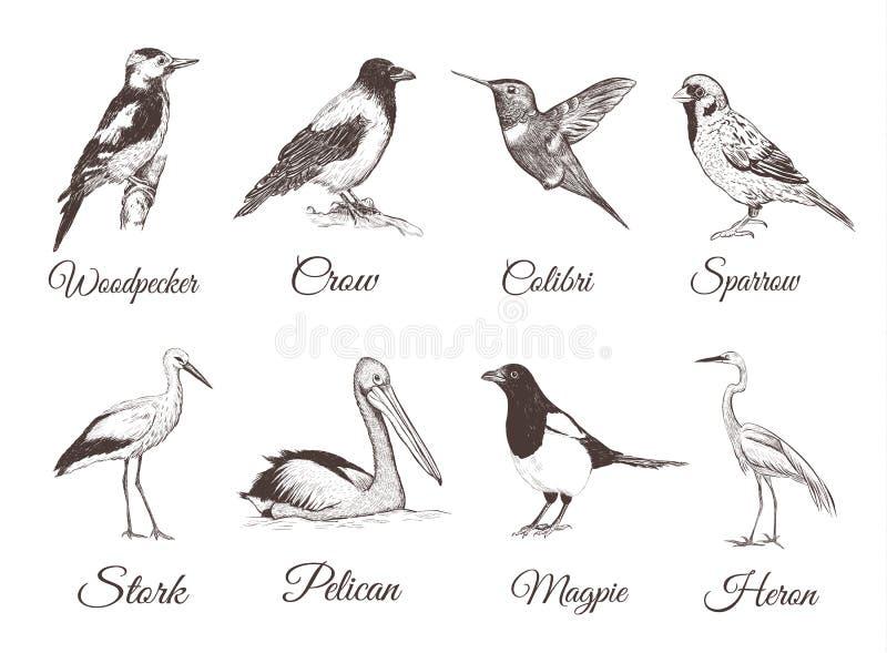 Fågeluppsättningen skissar Samling av fåglar stock illustrationer