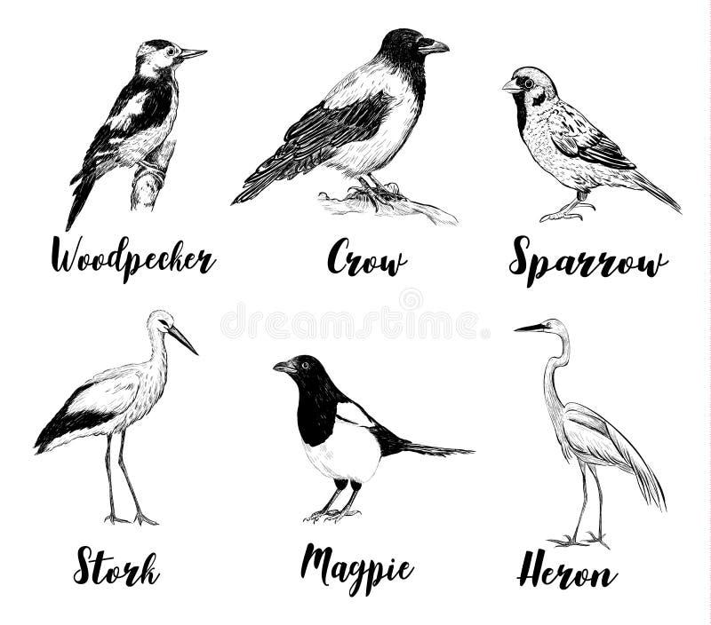 Fågeluppsättningen skissar Samling av fåglar royaltyfri illustrationer