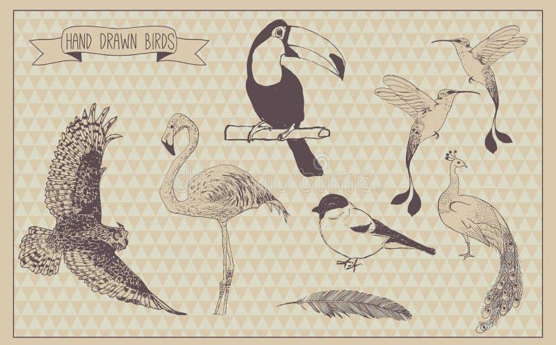 Fågelvektoruppsättning fågel tecknad hand Trevliga designbeståndsdelar för dina bäst idérika idéer vektor illustrationer
